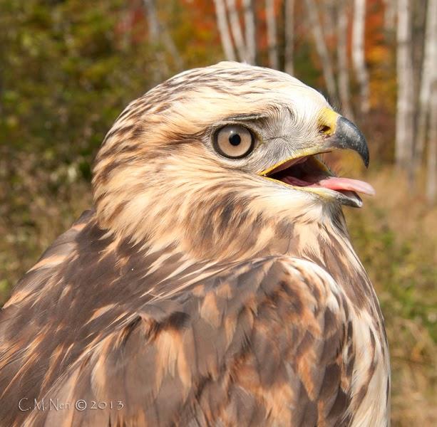 Owl Banding y Stargazing - Parque del Cielo Oscuro del Condado de Emmet