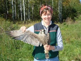 Take Flight with Hawk Ridge - September 29 @ Pier B Resort | Duluth | Minnesota | United States