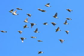Fall Bird Migration Workshop - 8/27&28